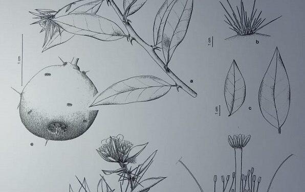 El valor del dibujo en la ciencia