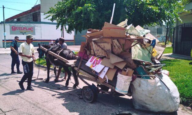 Maltrato animal en Quilmes: cada 8 horas muere un caballo de carro