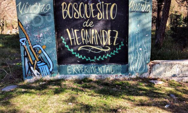 El bosquecito de Hernández en peligro
