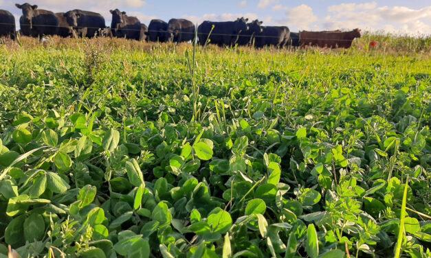 Argelanda: producir sin agrotóxicos es posible