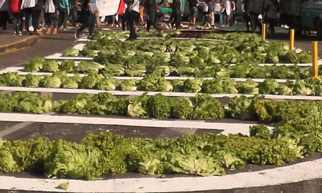 Verdurazo Federal: alimentos sanos y cooperativos