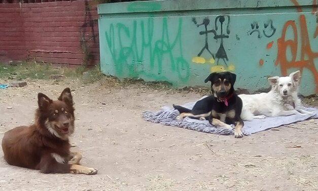Mujer necesita un espacio para vivir junto a sus perros