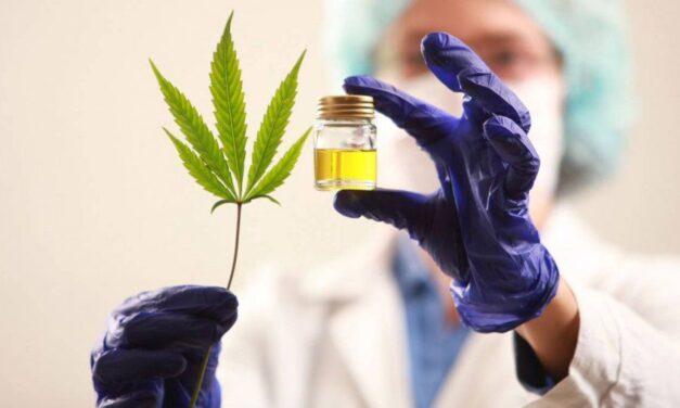 Se presentó el proyecto de Ley de Cannabis medicinal