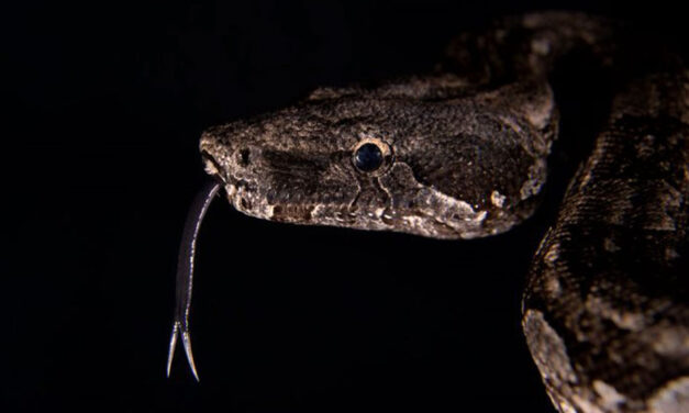 Mucho más que un serpentario: enseñar a través de una visita
