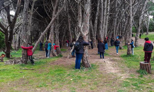 Los árboles de la energía ¿Mito o realidad?
