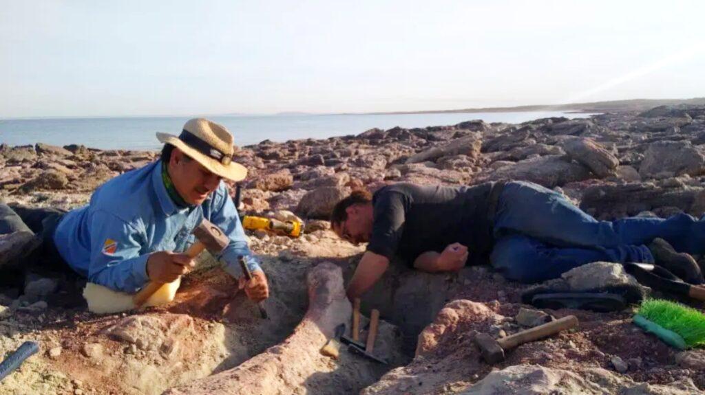 Hallazgo de restos fósiles