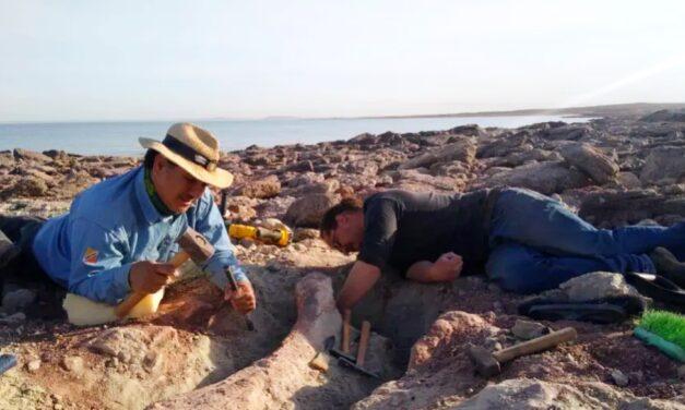 Viaje al Cretácico: descubren fósiles de 90 millones de años en Neuquén