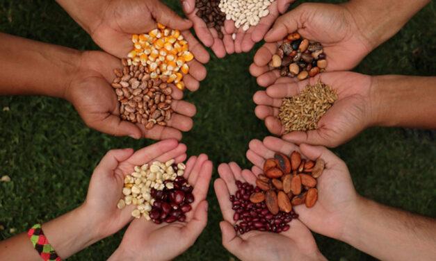 Formación en Soberanía Alimentaria y Cultura Comunitaria