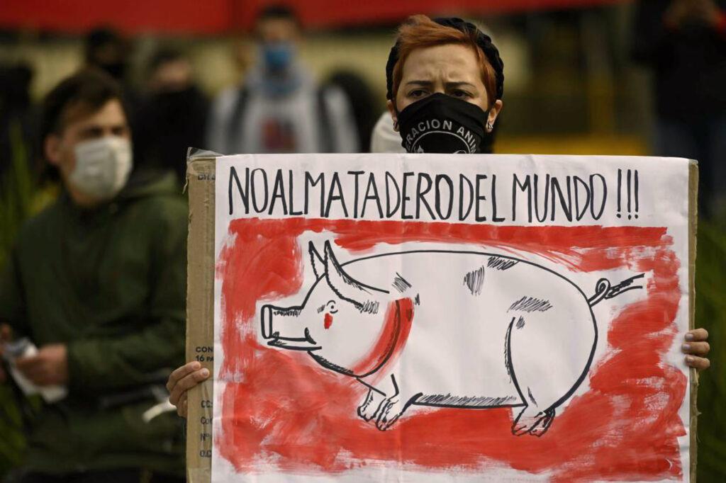 No a las mega granjas porcinas