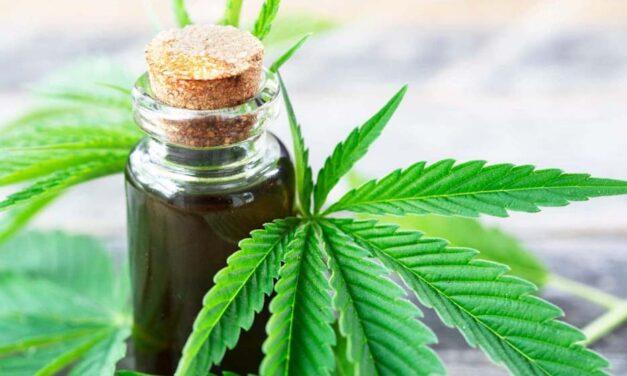 Regulación del cannabis, un derecho humano