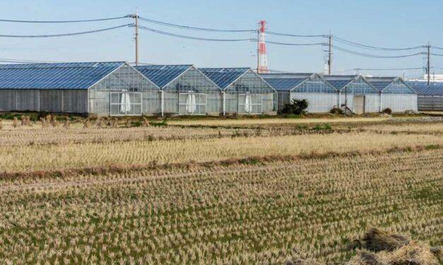 Invernaderos solares: el futuro de la energía renovable