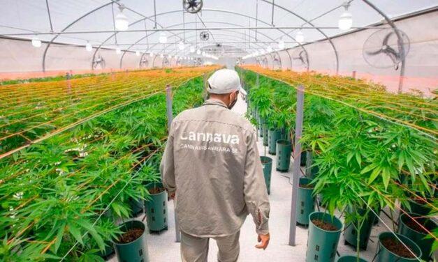 Argentina se convierte en el primer productor de cannabis medicinal en toda Latinoamérica